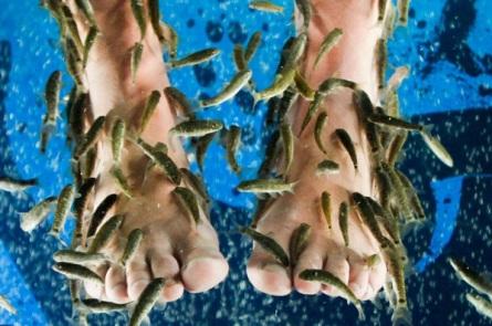 fisk fødder