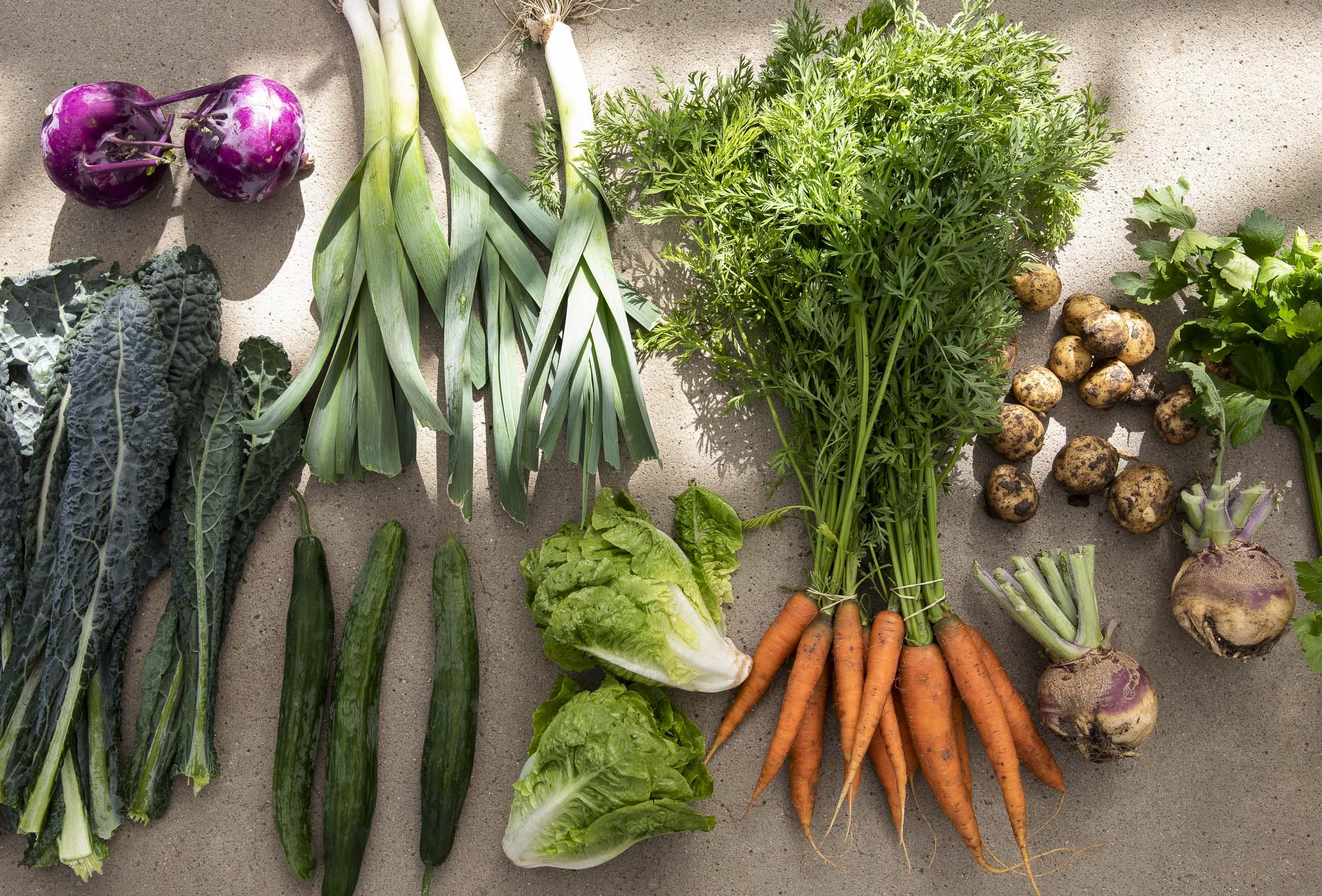 Frit valg til alt hos Kiselgården – Leverandør til Noma, Geranium og AOC! Besøg én af landets mest eftertragtede gårde og få grøntsager, urter og spiselige blomster
